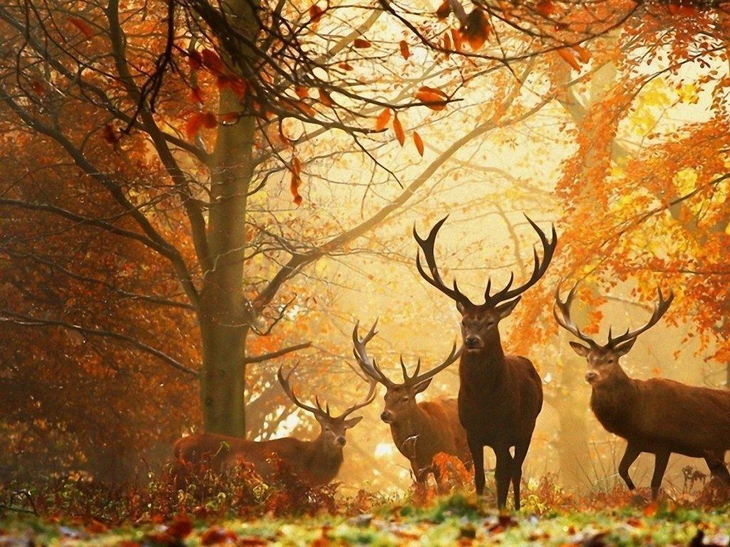 олени в осеннем лесу