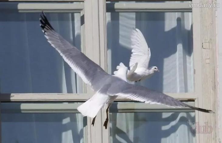 Примета: к чему бьется птица в окно здания